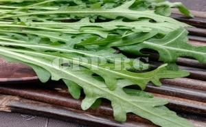 Семена за Вкусна Рукола