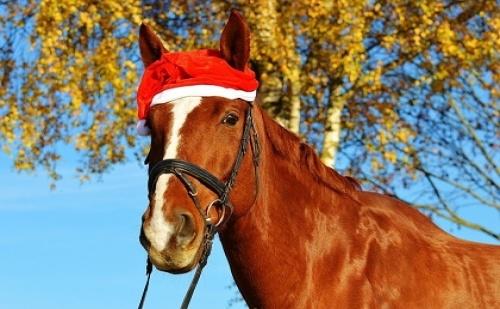 """Изненадай Своето Дете за Коледа с 30 мин Езда + Възможност за Подаряване на Подарък на Детето от Ранчо """"ел Пасо"""""""