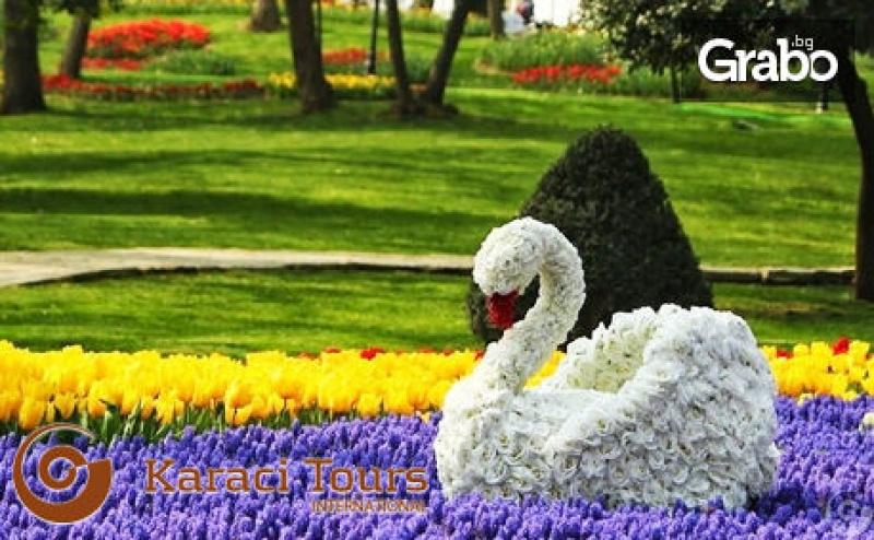 За Фестивала на Лалето в <em>Истанбул</em>! 2 Нощувки със Закуски в Хотел 4* с Ползване на Басейн и Сауна, Плюс Транспорт на 4 Април